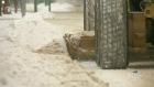 CTV Saskatoon: Grading city snow-clearing efforts