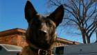 CTV Saskatoon: Police dog killed in accident
