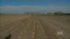 CTV Saskatoon: Sask. farm develops potato seeds