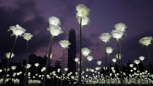LED light roses are lit up at the 'Light Rose Garden', against the backdrop of Central, the business district of Hong Kong, Saturday, Feb. 13, 2016. (AP Photo / Kin Cheung)