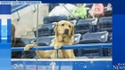 CTV Saskatoon: Guide dog Graham back in Cali.