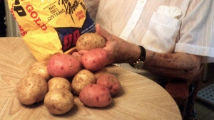 Gary Johnston shows off Yukon Gold and Ruby Gold potatoes in his Guelph, Ont., home in this 1999 file photo. This year marks the 50th anniversary of the development of the Yukon Gold potato by scientist Gary Johnston at the University of Guelph. (THE CANADIAN PRESS / Judy Creighton)