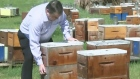 CTV Saskatoon: Sask. beekeepers buzzing