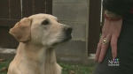 Toxic treat: Dog owner warns of near-fatal  scare