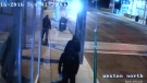 Suspects in Toronto shooting at Pizza Pizza