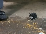 Sylvester, a feral cat, sits in a loading dock at the Jacob Javits Convention Center in New York, Thursday, Oct. 20, 2016. (AP / Verena Dobnik)